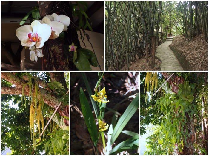 Orchids, ferns and bamboo at Belum Eco Resort
