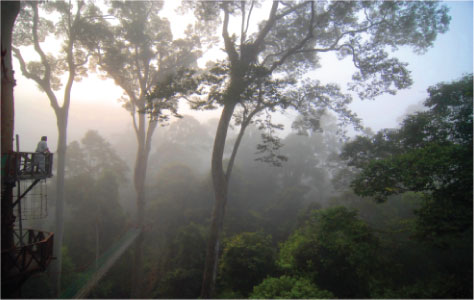 Borneo Rainforest Lodge Canopy and Mist