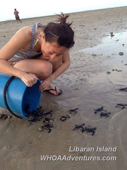 Releasing of turtles on Libaran beach