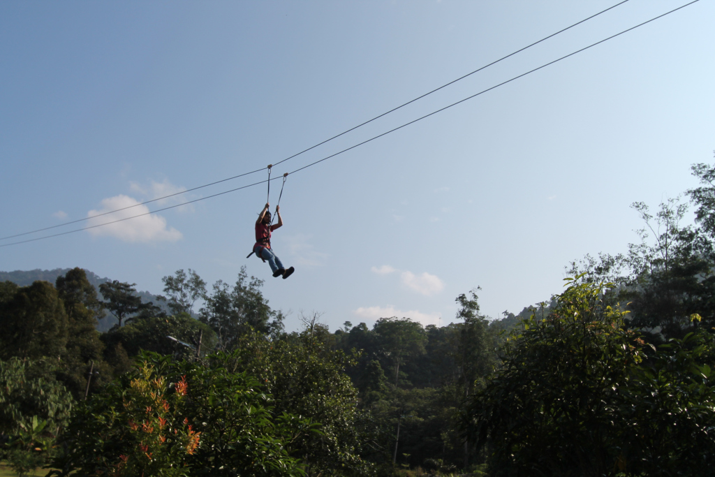 Flying Fox Kalumpang